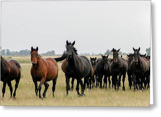 Horse Herd On The Hungarian Puszta Greeting Card