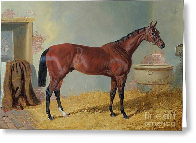 The Horse Greeting Cards - Horse in a Stable Greeting Card by John Frederick Herring Snr