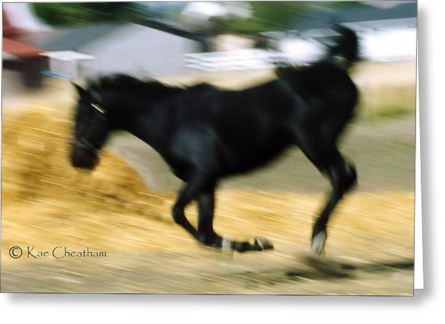 Horse In Action Greeting Card