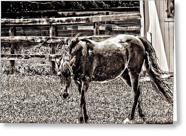 Horse In Black And White Greeting Card by Annie Zeno