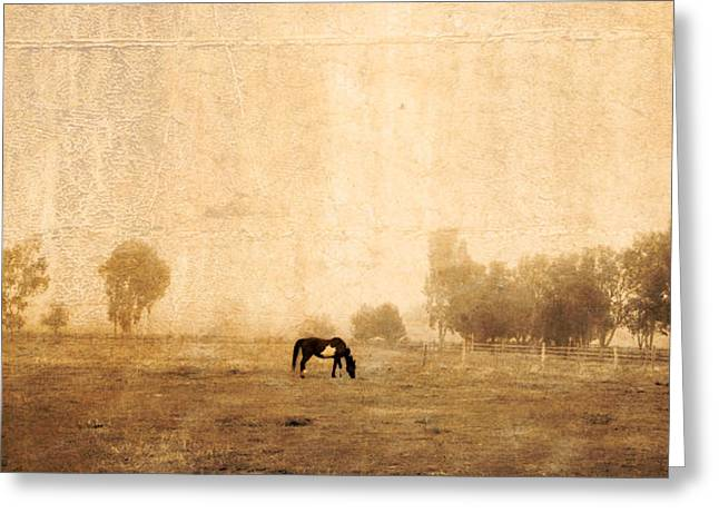 Horse In Pasture 1 Greeting Card by Vivian Frerichs