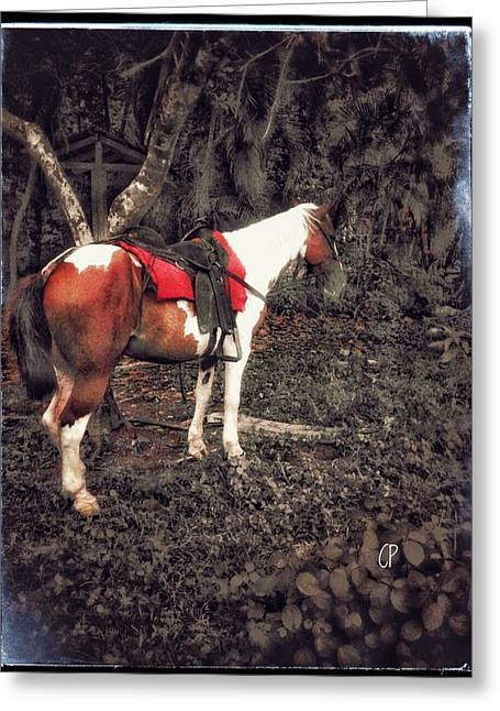 Horse In Red Greeting Card