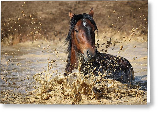 Horse In Water Greeting Card by Vedran Vidak
