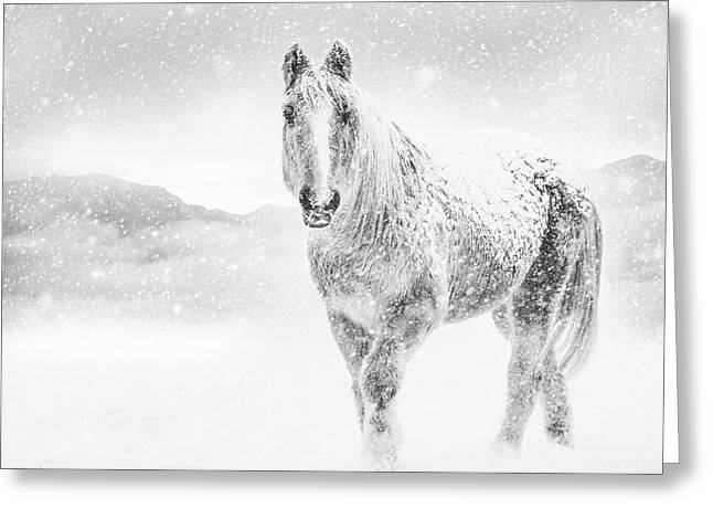 Horse In Winter Snow Storm Greeting Card by Debi Bishop