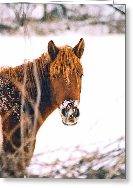 Horse In Winter Greeting Card