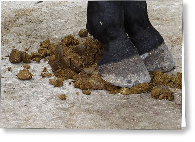 Horse Manure Greeting Card
