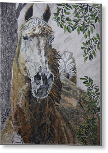 Horse Greeting Card by Melita Safran