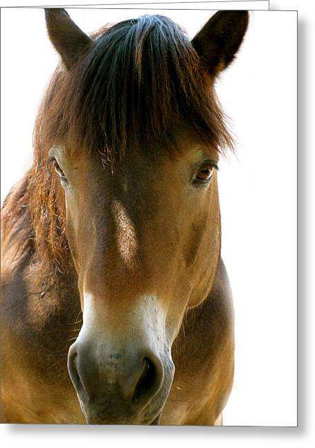 Horse Of Course Greeting Card
