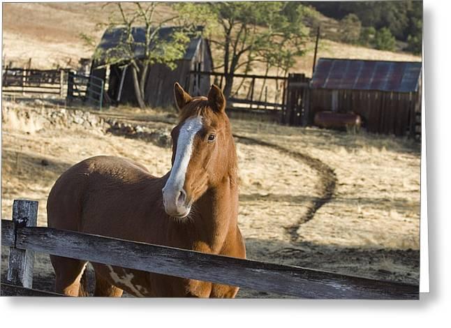 Horse On Santa Rosa Creek Road Greeting Card by Rich Reid