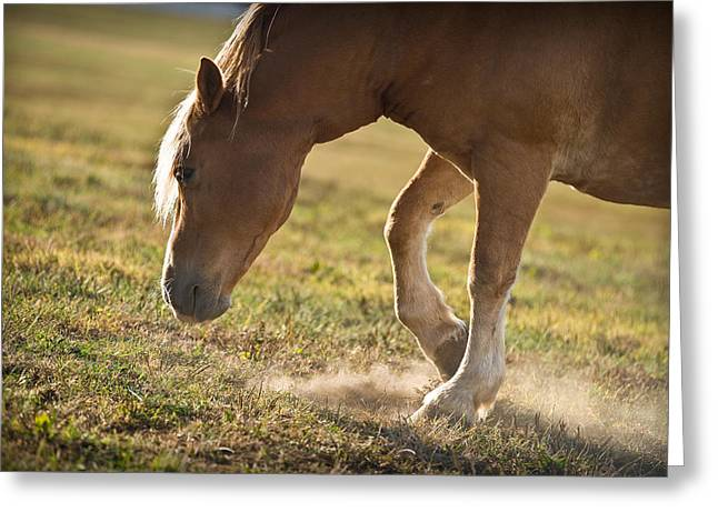 Horse Pawing In Pasture Greeting Card by Steve Gadomski