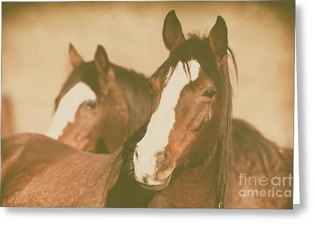 Horse Portrait Greeting Card by Ana V Ramirez
