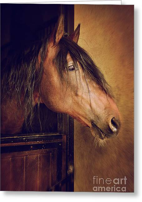 Horse Portrait Greeting Card by Carlos Caetano