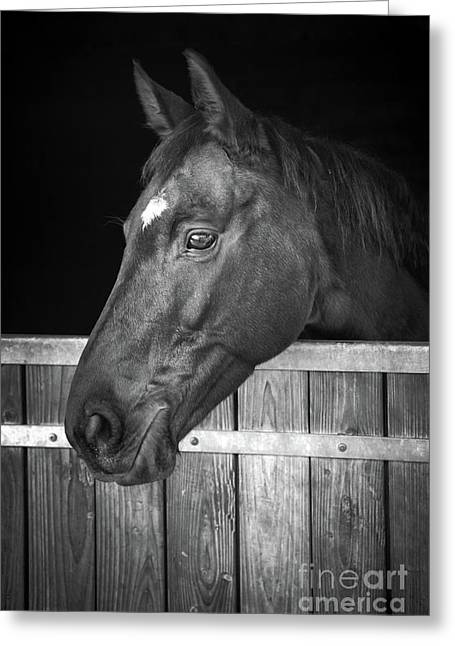 Horse Portrait Greeting Card by Delphimages Photo Creations
