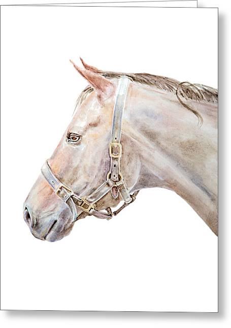 Horse Portrait I Greeting Card