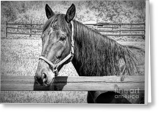 Horse Portrait In Black And White Greeting Card