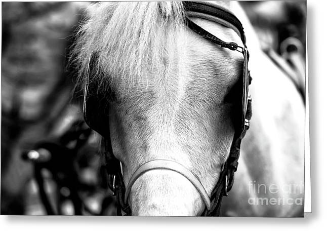 Horse Portrait In Sorrento Greeting Card by John Rizzuto