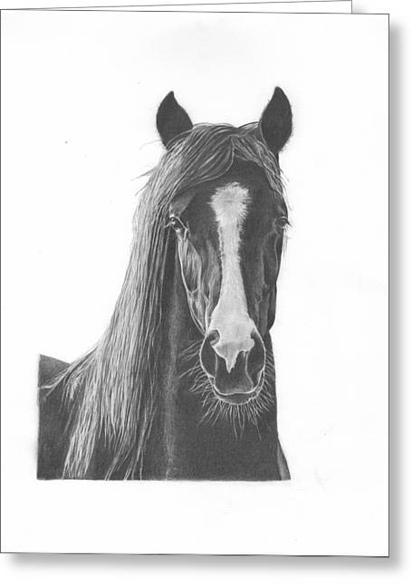 Horse Portrait Greeting Card by Sue Olson