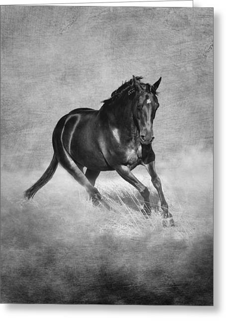 Horse Power Black And White Greeting Card by Michelle Wrighton