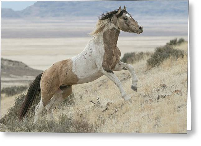 Horse Power Greeting Card