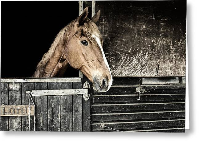 Greeting Card featuring the photograph Horse Profile In The Stable by Marion McCristall