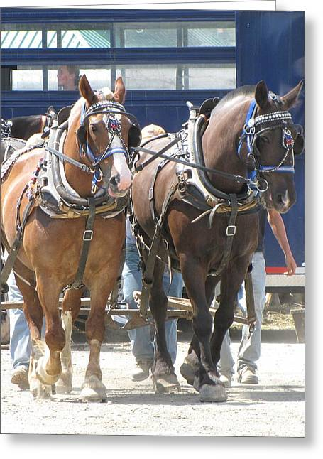 Horse Pull J Greeting Card by Melissa Parks