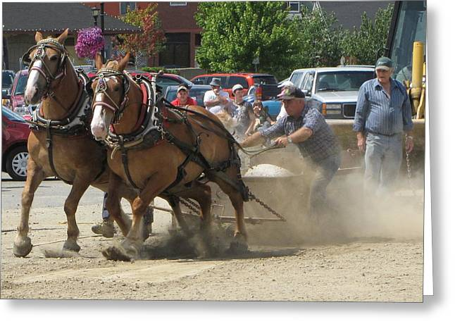 Horse Pull K Greeting Card by Melissa Parks
