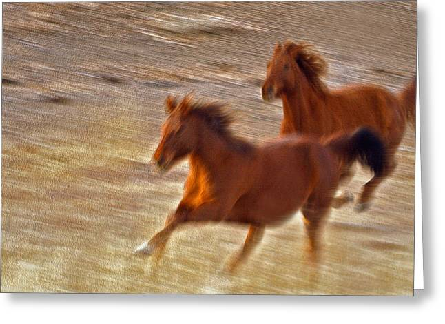 Horse Race Greeting Card by James Steele