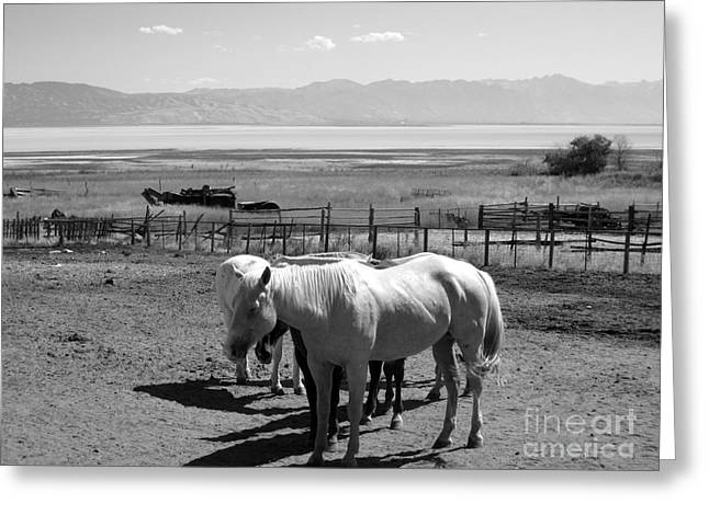 Horse Ranch Greeting Card