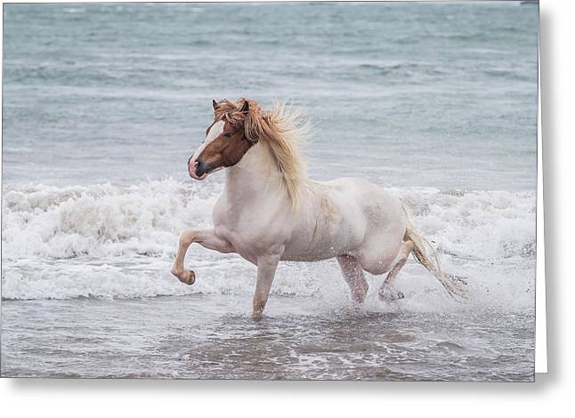 Horse Running On Coastline, Iceland Greeting Card by Panoramic Images