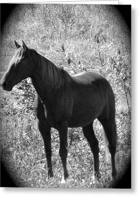 Pastureland Greeting Cards - Horse Scope Greeting Card by Debra     Vatalaro