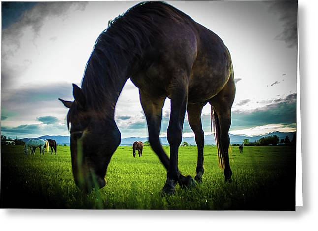 Horse Time Greeting Card
