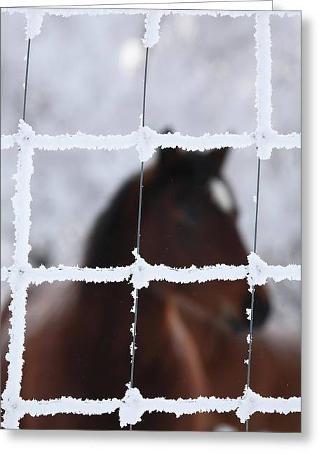 Snow-covered Landscape Digital Art Greeting Cards - Horse viewed through frost covered fence Greeting Card by Mark Duffy