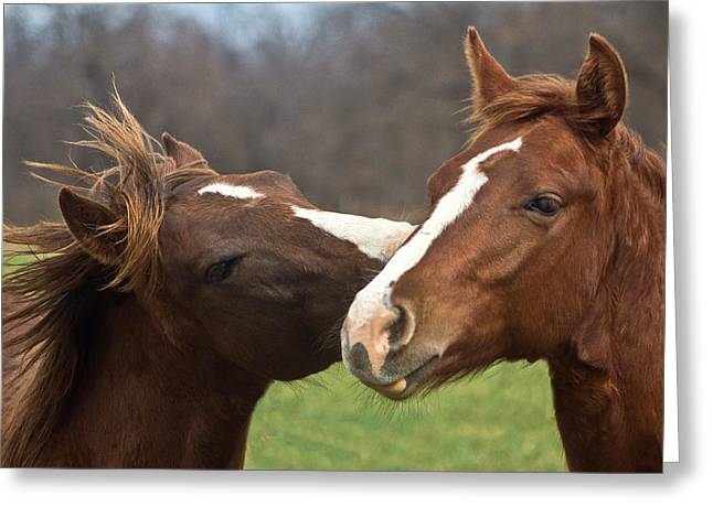 Horse Whisperer Greeting Card by Mamie Thornbrue