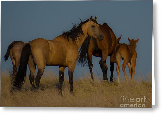 Horses 1 Greeting Card