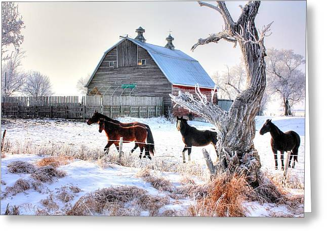 Horses And Barn Greeting Card