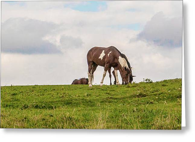 Horses And Clouds Greeting Card