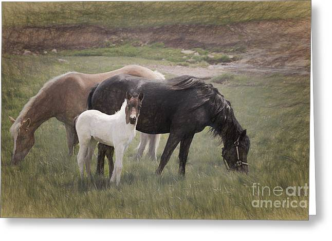 Horses And Colt  Greeting Card