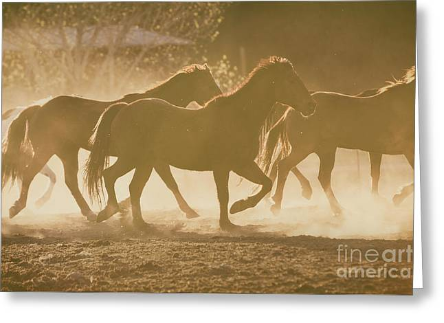 Greeting Card featuring the photograph Horses And Dust by Ana V Ramirez