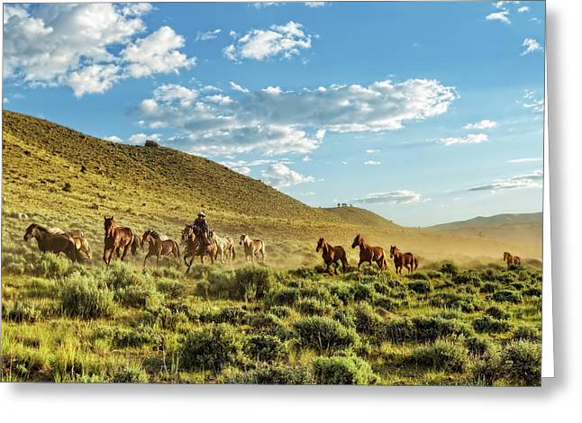 Horses And More Horses Greeting Card