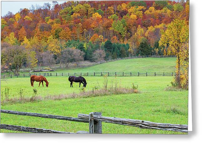 Horses Contentedly Grazing In Fall Pasture Greeting Card