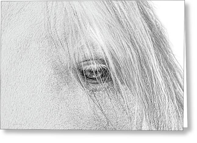 Horse's Eye Portrait Monochrome Greeting Card by Jennie Marie Schell