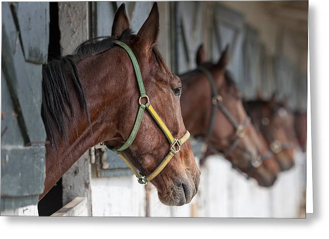 Horses For Sale Greeting Card by Brian Mollenkopf