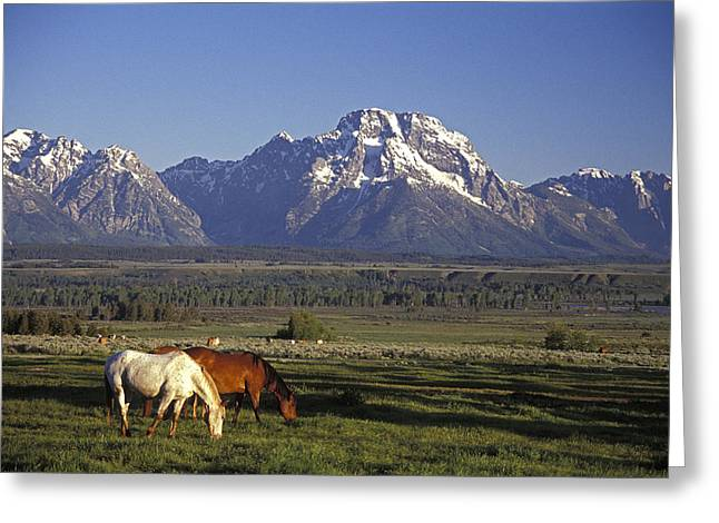 Horses Graze At Lost Creek Ranch Greeting Card by Richard Nowitz