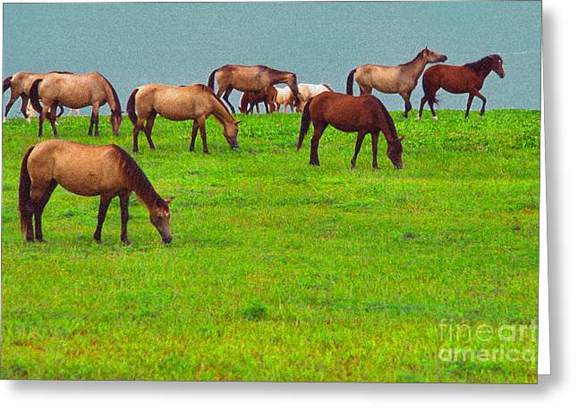 Horses Graze By Seaside Greeting Card