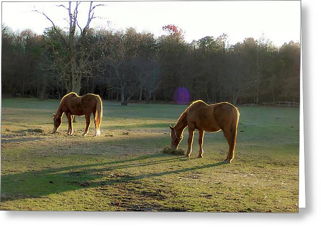 Horses Grazing At Sunset Greeting Card by Greg Rogers