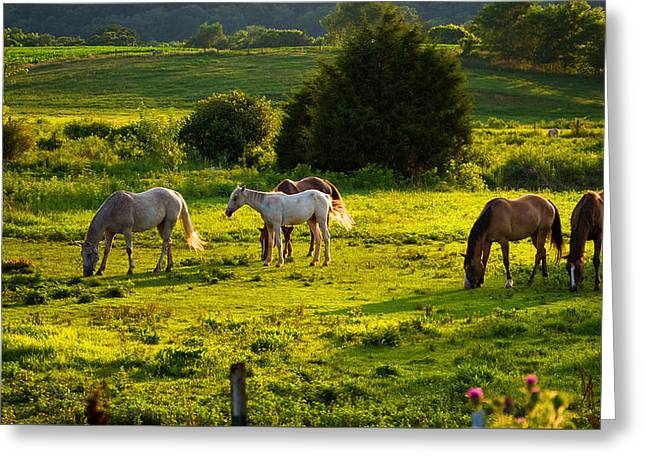 Horses Grazing In Evening Light Greeting Card