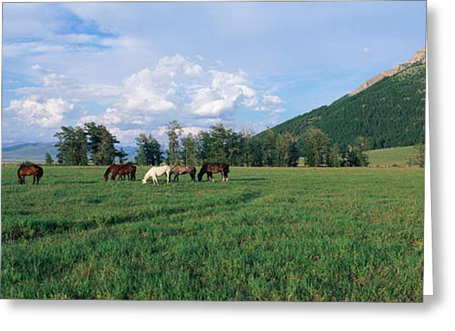 Panoramics Greeting Cards - Horses Grazing In Pasture Greeting Card by Panoramic Images