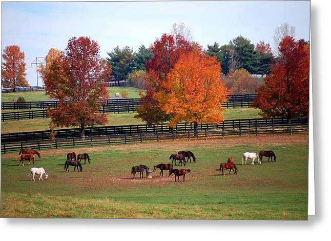 Horses Grazing In The Fall Greeting Card