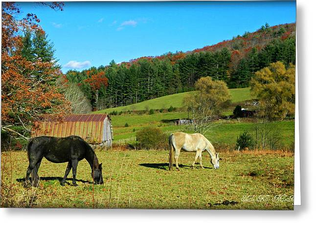 Horses Grazing The Pasture Greeting Card