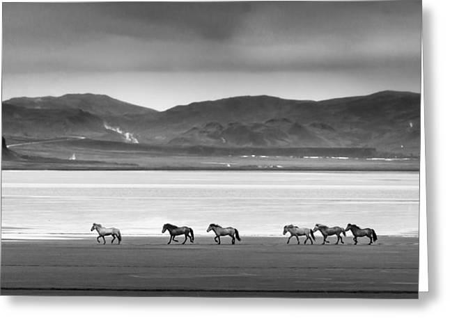 Horses, Iceland Greeting Card
